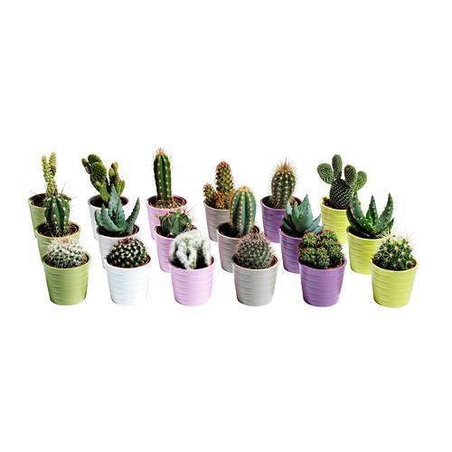 cactaceae-potteplante-med-urtepotte__0159335_PE315851_S4